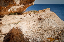 20110922_114659_Sardinien_1367.jpg
